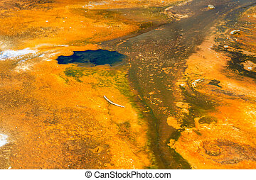 Microbial mats in geothermal pools, Yellowstone National Park ,Wyoming