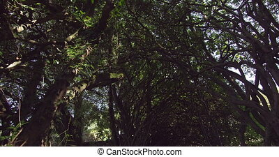 Panoramic shot of peaceful wooded area on a sunny day