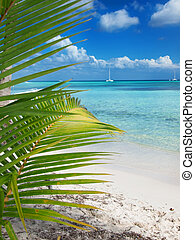 tropical beach in Dominican republic Caribbean sea island...