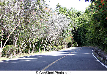 Road via forest and mountains. - A road via forest and...