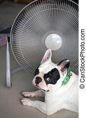 caliente, perro
