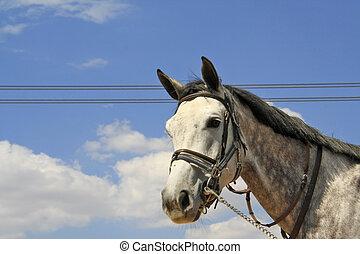 White horse - Beautiful white horse