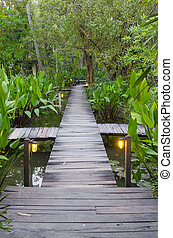 board walk in the tropical forest
