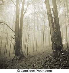 Two big trees and misty forest