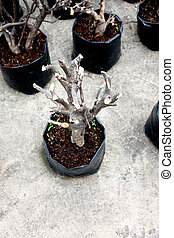 Tree pruning to propagation. - The Tree pruning to...