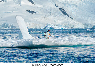 Gentoo penguins on iceberg Antarctica