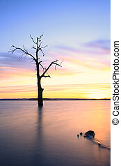 Old tree in lake at sunset landscape