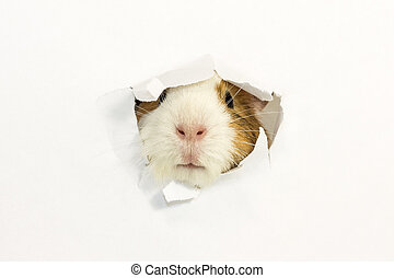 Rodent ate a hole in a paper. - Rodent stuck my face through...
