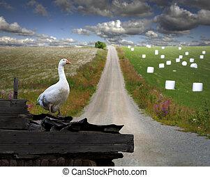 goose in rural landscape