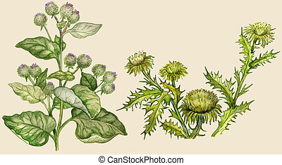Burdock and thistle, painted in vintage manner. Isolated on...
