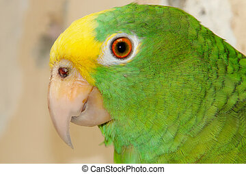 parrot - green and yellow parrot, tropical bird of colombia