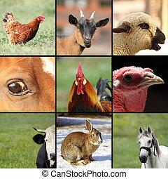 granja, imágenes, animales, Colección