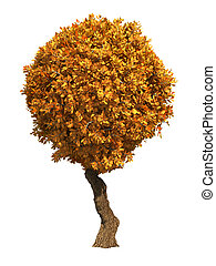 Autumn Tree Isolated on White Background - Autumn Decorative...