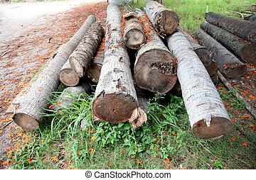 Coconut Timber stack together. - The Coconut Timber stack...