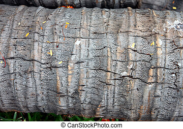 Texture of a Coconut Timber. - The Texture of a Coconut...