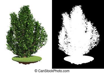décoratif, fond, buisson, blanc, isolé