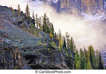 Low clouds above pine trees, Lake O'Hara, Yoho National...