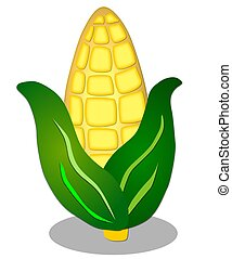 illustration of corn on white