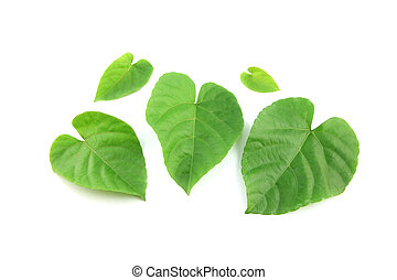 Green leaves shaped like heart. - Green leaves shaped like...