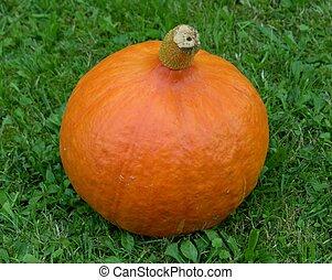 pumpkin on gras
