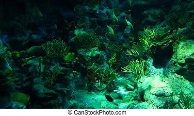Underwater world 1 - Common view