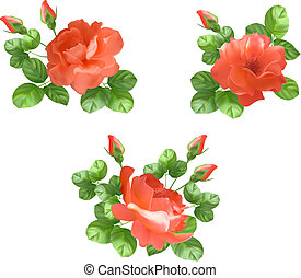 Vector flower rose collection - Vector flower collection...