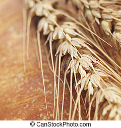background of bread and spikes