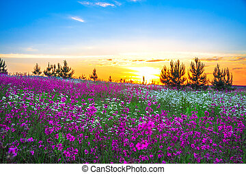 summer sunrise over a blossoming meadow - beautiful summer...