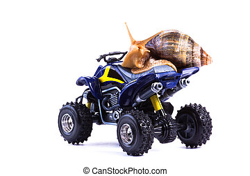 Snail on Quad 2 - A snail riding a toy quad model