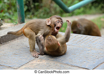 Macaque monkeys at Swayambhunath monkey temple. Kathmandu,...