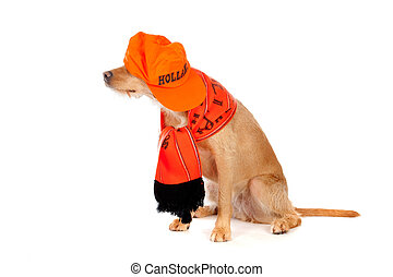dog - a brown dog, ready to suppport the dutch soccerteam