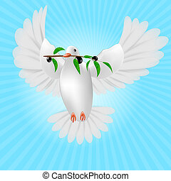 White pigeon with olive branch