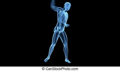 Visible skeleton - Medical animation of a tennis player...