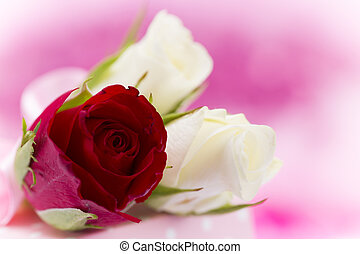 Natural red roses background, close-up.