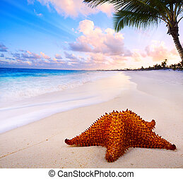 Art beautiful  landscape with Sea star on the beach