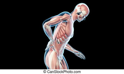 Backache animation - Medical animation of a man having a...