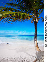 トロピカル, 浜, 芸術, カリブ海, 海