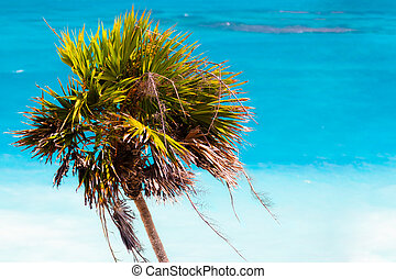 Palmtree - A palmtree over the clear waters of the ocean