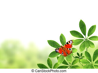 Green leaves and butterfly - Summer frame with green leaves...
