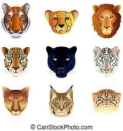 grande, gatos, cabeças, vetorial, jogo