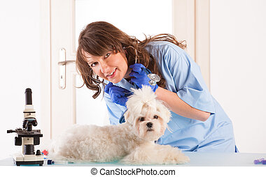 Woman vet with a small dog - Beautiful woman veterinarian...