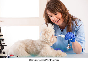 Woman vet with a little dog