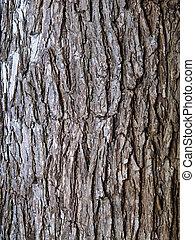 Elm Tree Bark - Ridged bark of Elm tree