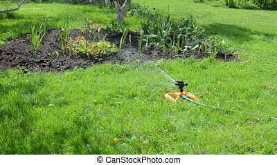 sprinkler woman hose - Gardener woman unplug water hose to...