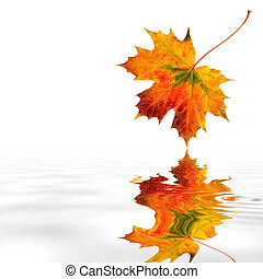 Maple Leaf Beauty - Maple leaf abstract in the colors of...