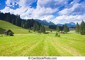 Val di fiemme plateau - Beautiful alpine plateau in Val di...
