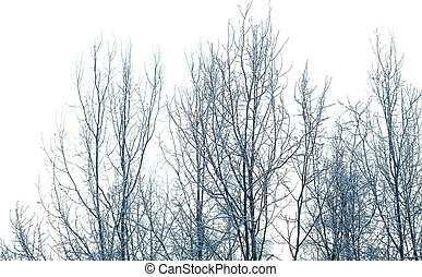 snow covered trees isolated on white