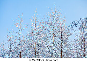 snow covered trees on pale winter sky background