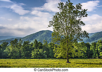 Cades Cove in the Smoky Mountains National Park near...