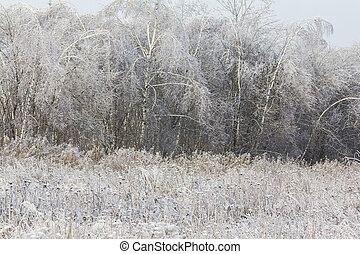 generic winter landscape - frozen meadow and forest -...